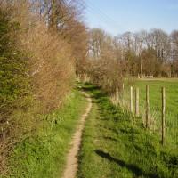 Cuxton dog walk, Kent - Dog walks in Kent