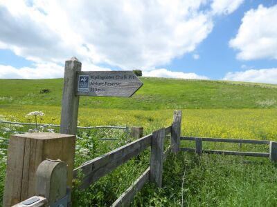 Hudson Way dog walk near Market Weighton A614, East Yorkshire - Driving with Dogs