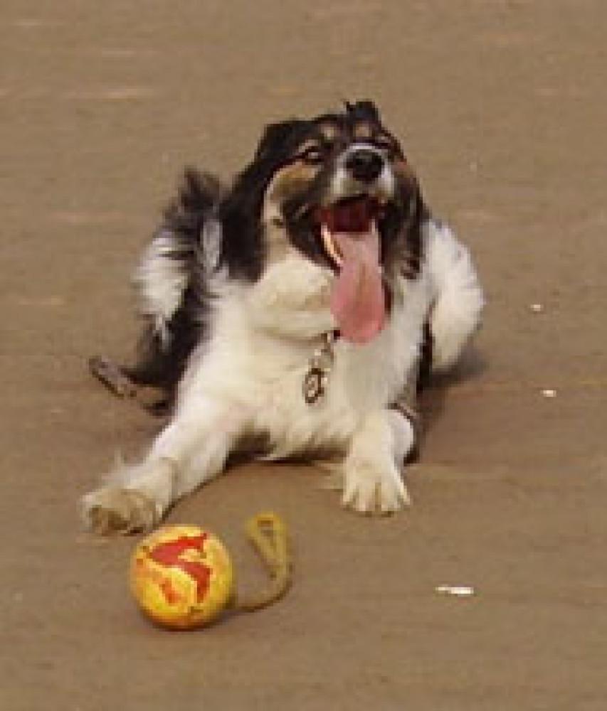 Dog-friendly beach and dog walk near Bude, Cornwall - jem