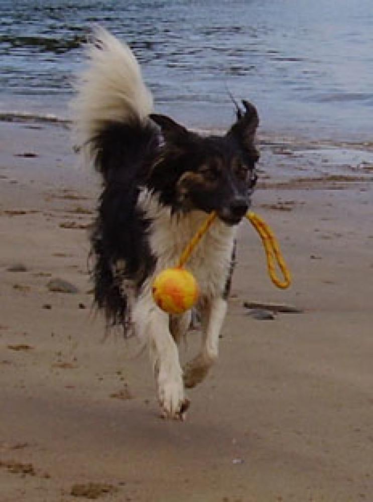 Secret dog-friendly beach near St David's, Wales - Dog walks in Wales