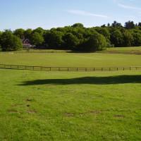 A60 Country Park dog walk, Nottinghamshire