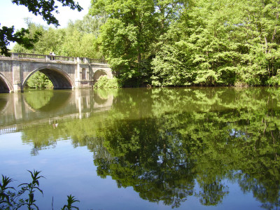 Clumber Park dog walk and cafe, Nottinghamshire - Driving with Dogs