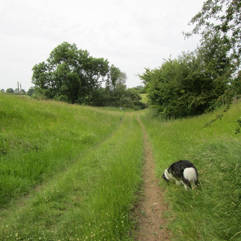 A6 doggiestop with walk and dog-friendly pub, Leicestershire - Leicestershire dog walk with dog-friendly pub