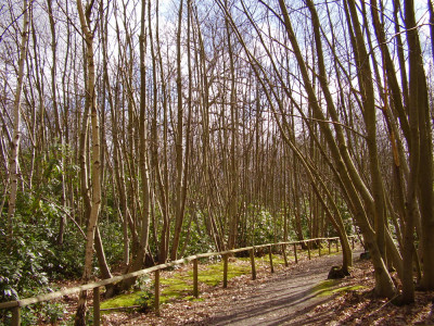 Selling dog-friendly pub and woodland dog walk, Kent - Driving with Dogs