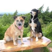 A49 dog-friendly pub and dog walk, Worcestershire - Dog walks in Worcestershire