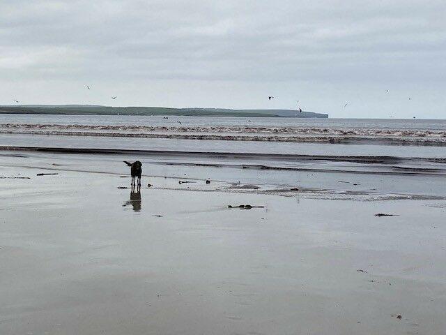 Large sandy and dog-friendly beach, Scotland - Dunnet 4.jpg