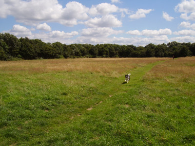 M3 Junction 1 dog walks on the heath, Greater London - Driving with Dogs