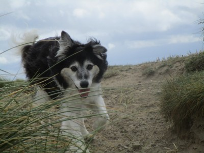 Dunes, beach and doggie delight, Devon - Driving with Dogs