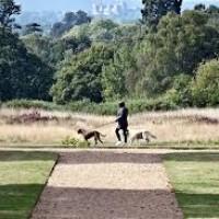 Langley Park dog walks, Buckinghamshire - langley.jpg