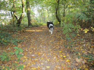 Big Woodland dog walk, Kent - Driving with Dogs