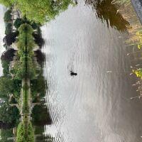 North Inch park and garden, Scotland - 6D1A1158-9E5A-4D40-BB85-7B20CE2CA174.jpeg