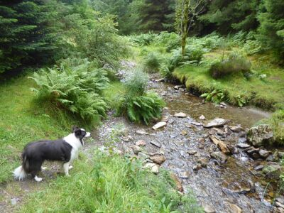 Forest centre dog walks near Keswick, Cumbria - Driving with Dogs