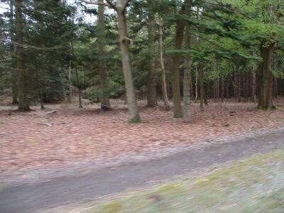 A12 dog walk in the Forest, Suffolk - Driving with Dogs