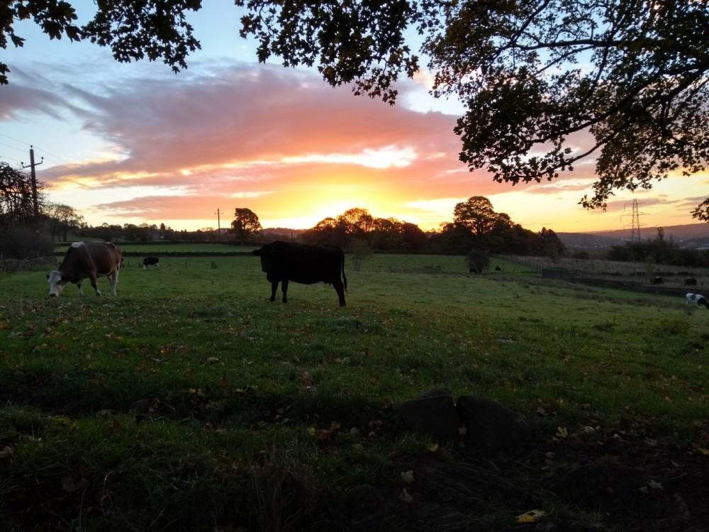Riddlesden Field dog walk, West Yorkshire - Dog walks in Yorkshire