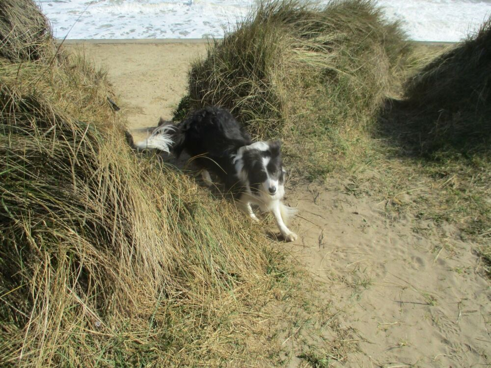 Eccles dog-friendly beach and cafe, Norfolk - Norfolk dog-friendly beaches.JPG