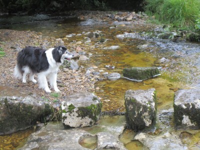 Wensleydale dog-friendly pub and dog walk, North Yorkshire - Driving with Dogs