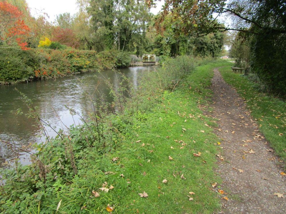 M4 dog-friendly pub and dog walk near Reading, Berkshire - Berkshire dog-friendly pub and dog walk
