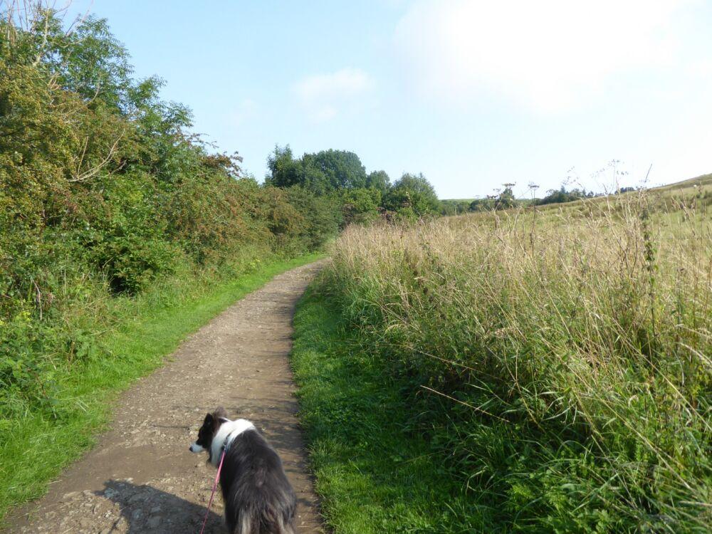Waterfalls dog walk and dog-friendly pubs, Northumberland - P1030650.JPG