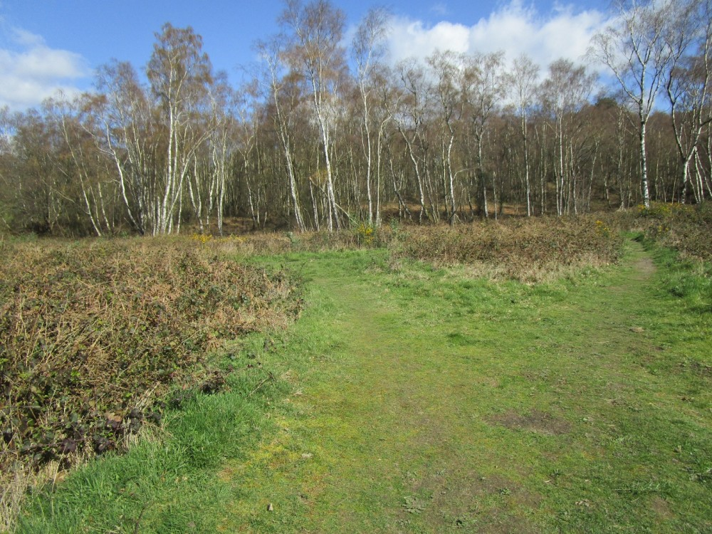 A25 woodland dog walk near Abinger Hammer, Surrey - Surrey dog-friendly pubs and dog walks.JPG