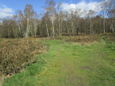 A25 woodland dog walk near Abinger Hammer, Surrey - Driving with Dogs