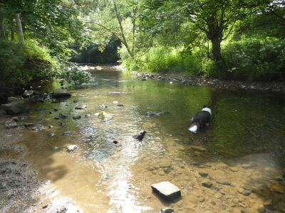 Picnic spot with doggy swimming off the A691, County Durham - Driving with Dogs