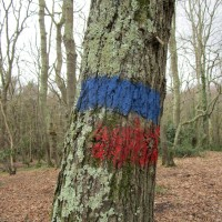 Woodland dog walks near Bexhill, East Sussex - Dog-friendly pubs with dog walks East Sussex.JPG