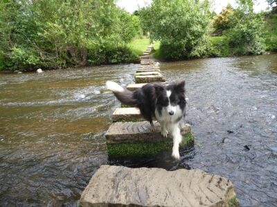 Historic dog-friendly pub and dog walk, North Yorkshire - Driving with Dogs