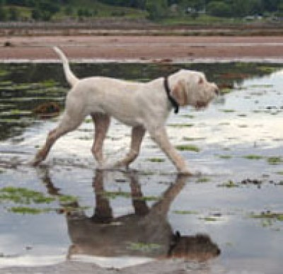 Applecross dog-friendly beach, Scotland - Driving with Dogs