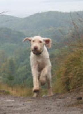 Bennachie dog walk near Inverurie, Scotland - Driving with Dogs