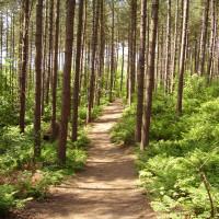Blidworth Woods dog walk, Nottinghamshire - Dog walks in Nottinghamshire