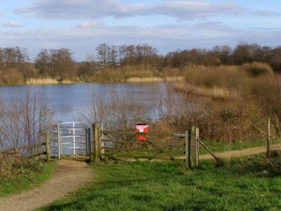 M27 lakeside dog walk near Southampton, Hampshire - Driving with Dogs
