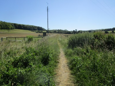 M40 Chilterns dog walk and dog-friendly pub, Buckinghamshire - Driving with Dogs