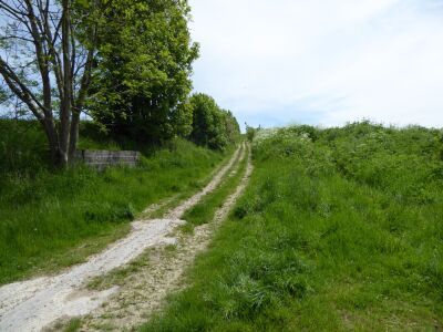 Dog-friendly country pub and dog walk near Market Rasen, Lincolnshire - Driving with Dogs
