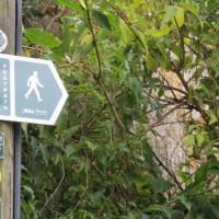 A3066 dog-friendly dining and dog walk, Dorset - IMG_0580.JPG