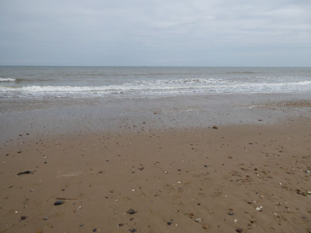 The Cow Shed Cafe and dog-friendly beach, East Yorkshire - Yorkshire dog-friendly beaches and dog walks