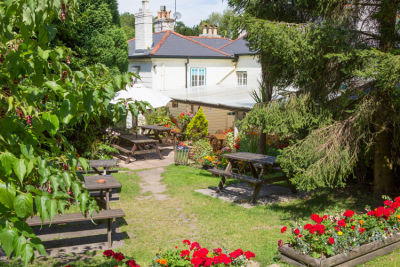 A35 New Forest dog-friendly pub and dog walk, Hampshire - Driving with Dogs