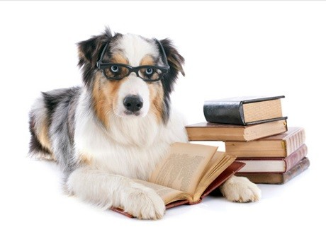 best books about dogs.jpg