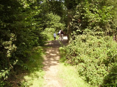 M1 Junction 15 Forest dog walks, Northamptonshire - Driving with Dogs