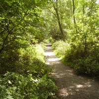 M1 Junction 15 Forest dog walks, Northamptonshire - Dog walks in Northamptonshire