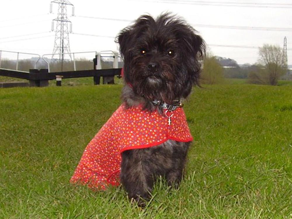 M1 Junction 24 towpath walk, Nottinghamshire - Dog walks in Nottinghamshire