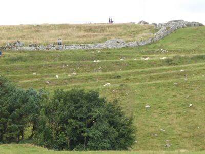 Dog walk through time in Roman Britain, Northumberland - Driving with Dogs