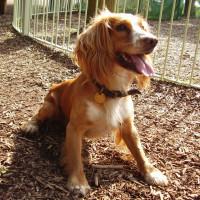 M4 Junction 16 family break and dog walk, Wiltshire - Dog walks in Wiltshire