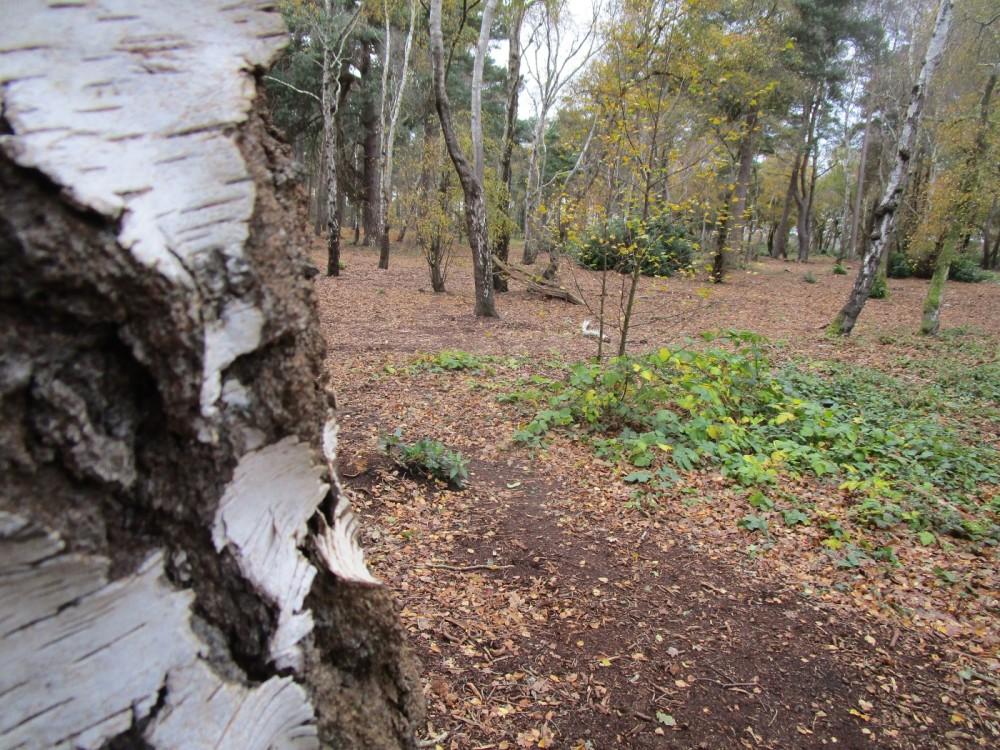 A351 short woodland dog walk, Dorset - IMG_6474.JPG