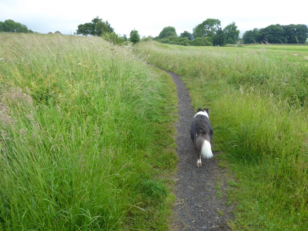 A dog walk in the tracks of the Tees railway, County Durham - Dog walks and dog-friendly cafes and pubs in County Durham