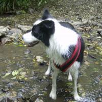 M5 Junction 18 Castle dog walks and cafe, Bristol - Dog walks in Bristol