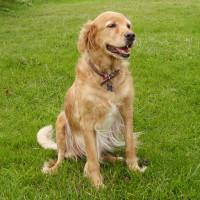 Portchester dog walk, Hampshire - Dog walks in Hampshire