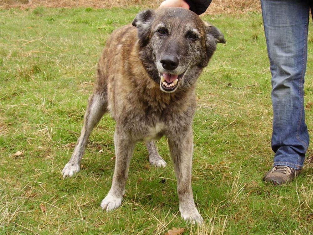 Woodland dog walk and dog-friendly pub, Oxfordshire - Dog walks in Oxfordshire