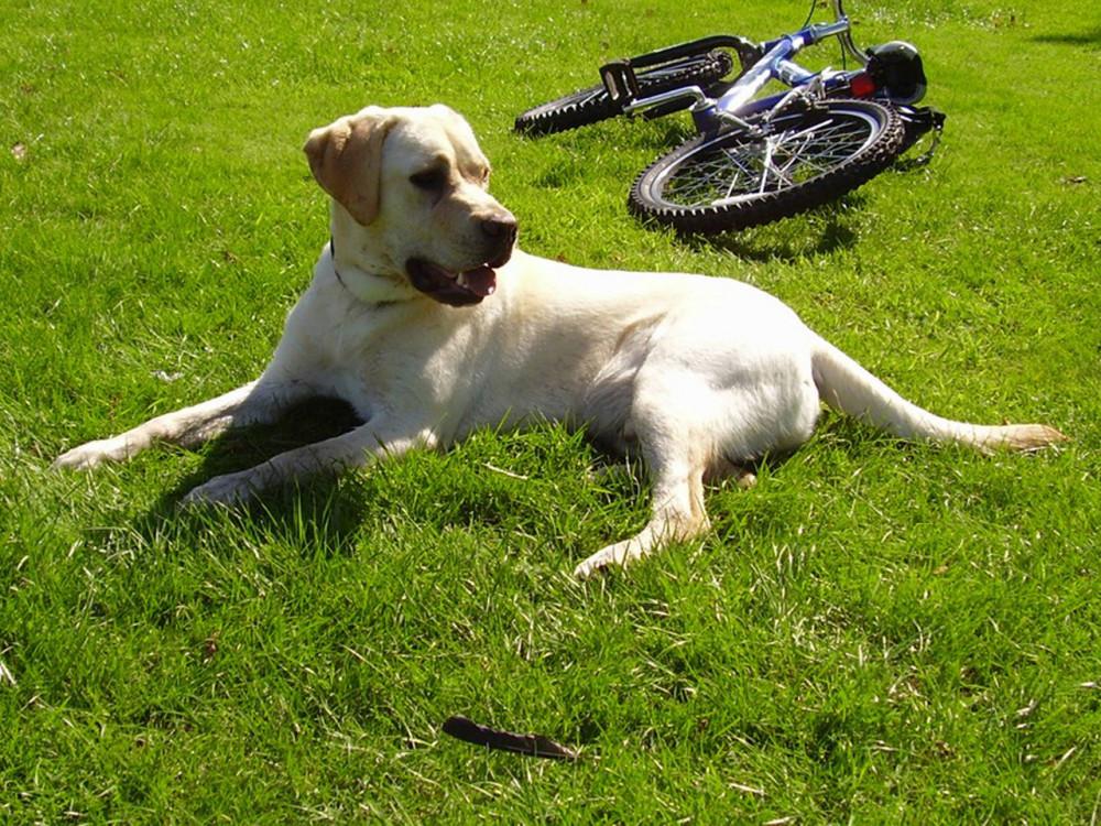 M60 dog walk near Stockport, Cheshire - Dog walks in Cheshire