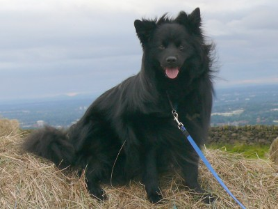 Werneth Low dog walks near Hyde, Cheshire - Driving with Dogs
