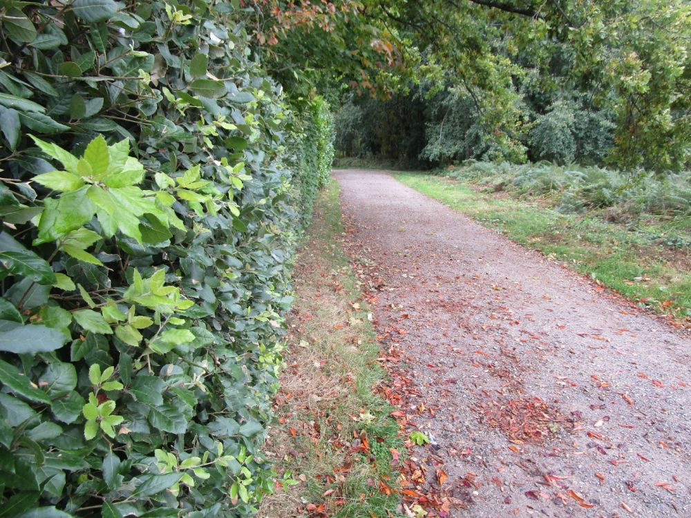 A4 dog friendly pub and dog walk near Hungerford, Berkshire - Berkshire dog walk and dog friendly pub